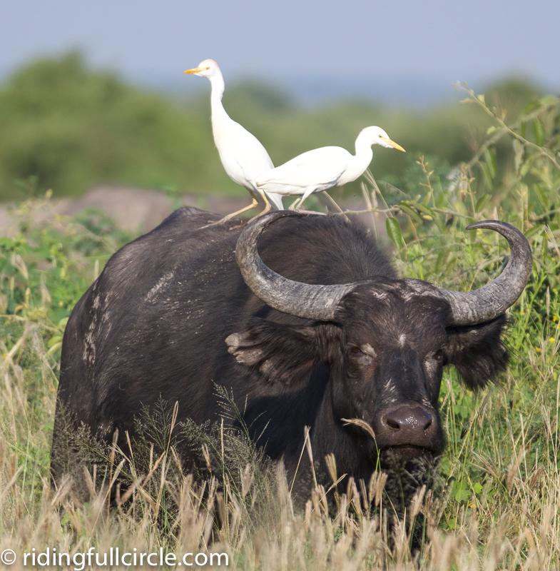Chobe Park Lodge Botswana