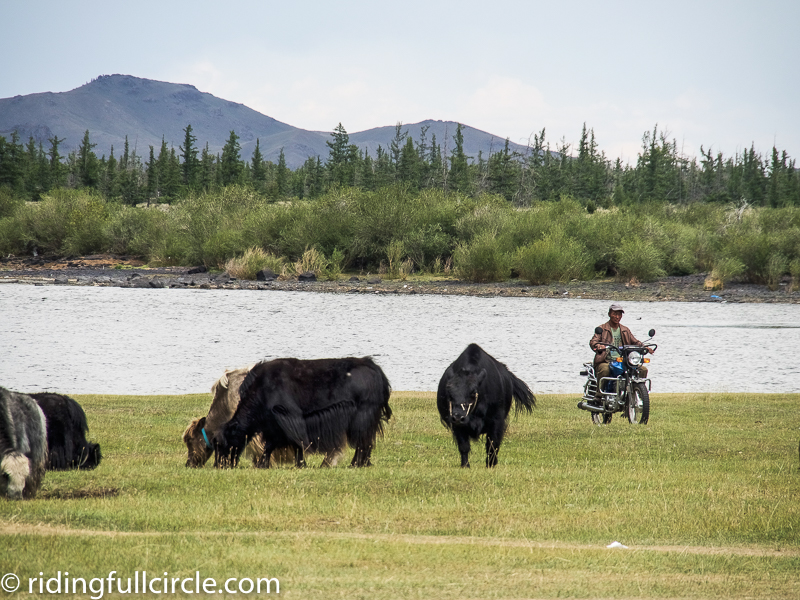 riding full circle heather lea dave sears motorcycle adventure mongolia ulaanbaatar yaks